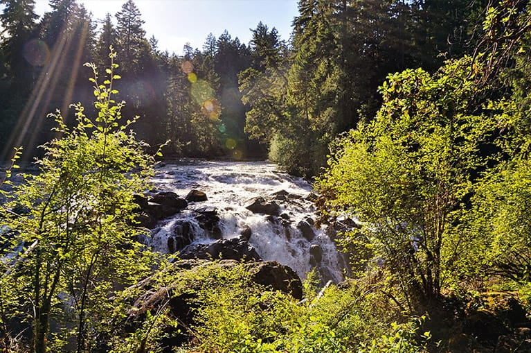 Englishman River Falls only a short drive away from Ocean Trails